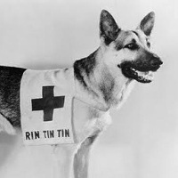 Rin-Tin-Tin movie dog