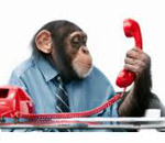 chimp on phone